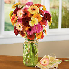 <span style=color:#bb0011>NEW</span> Gerbera Daisy Bouquet