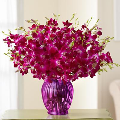 Exotic Breeze Orchids