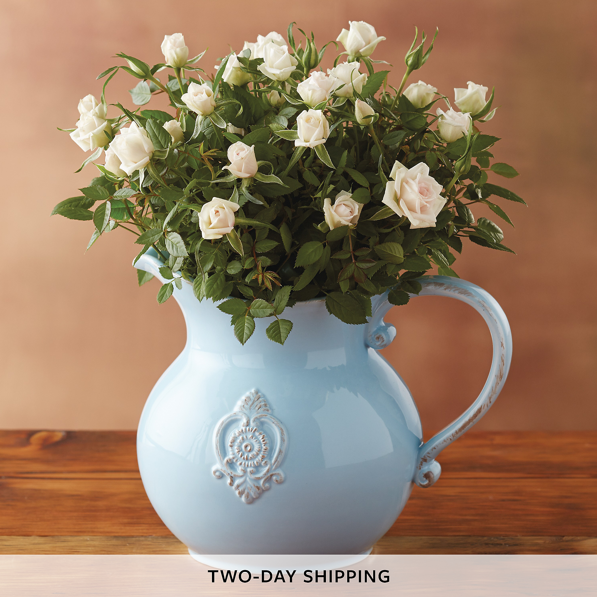 4 Quot White Mini Rose Plants Amp Garden Harry Amp David