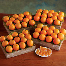 Navel Oranges - Four Trays