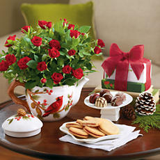 <span style=color:#bb0011>NEW</span> Holiday Mini Rose Plant Gift