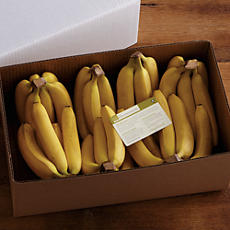 Bulk Fruit Bananas