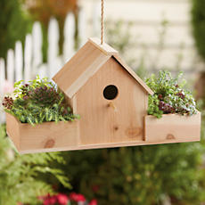<span style=color:#bb0011>NEW</span> Birdhouse with Succulents Gift