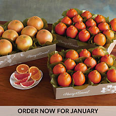 Cushman's® HoneyBells and Red Grapefruit - Three Trays