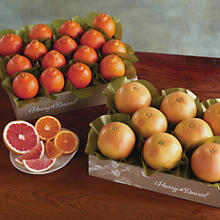HoneyBells and Red Grapefruit - Two Trays