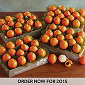 Cushman's Florida HoneyBells - 4 Box