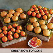 Cushman's® HoneyBells and Red Grapefruit - Four Trays