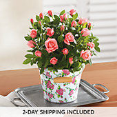 "NEW 6"" Mini Rose Garden Gift"