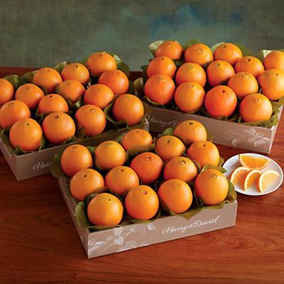Navel Oranges - Three Trays