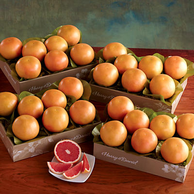 4 Boxes of Red Grapefruit
