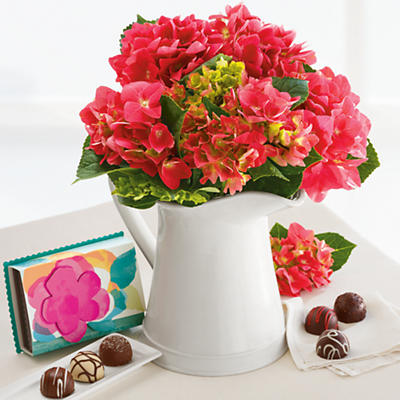Hydrangea with Chocolates