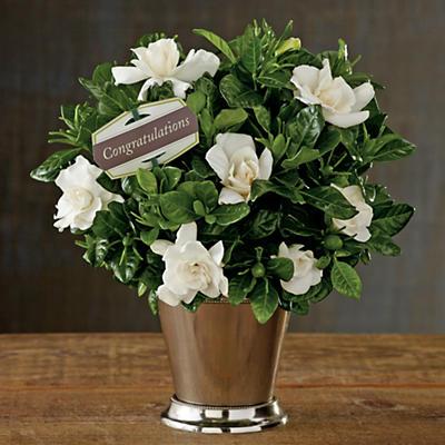 Pick Your Occasion Gardenia Gift