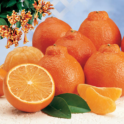 Cushman's® HoneyBells 8 Pounds