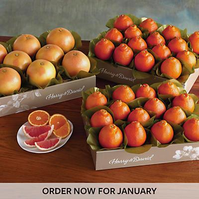 Cushman's® HoneyBells and Red Grapefruit - Three Trays